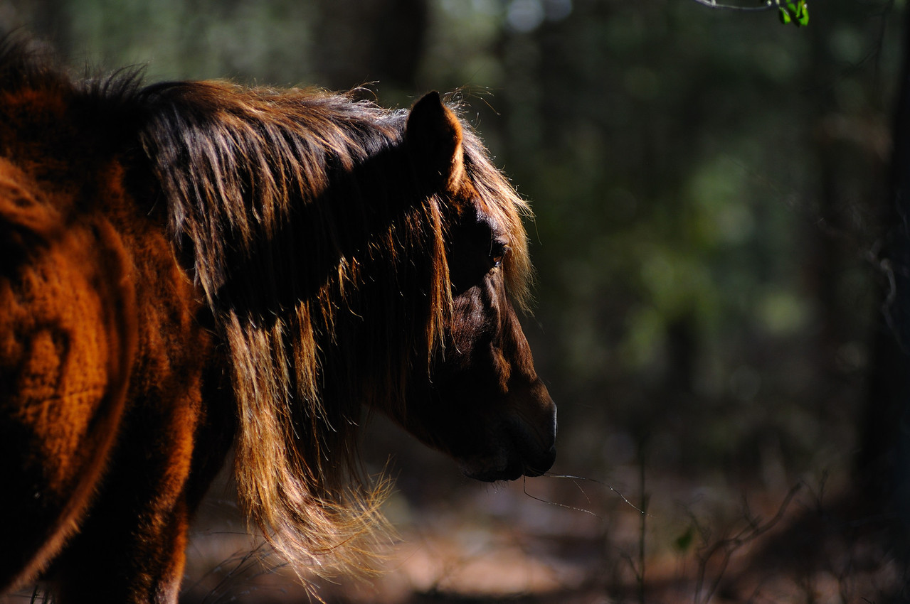 Deep in the woods I gave right-of-way to an old horse headed to it's watering pond.