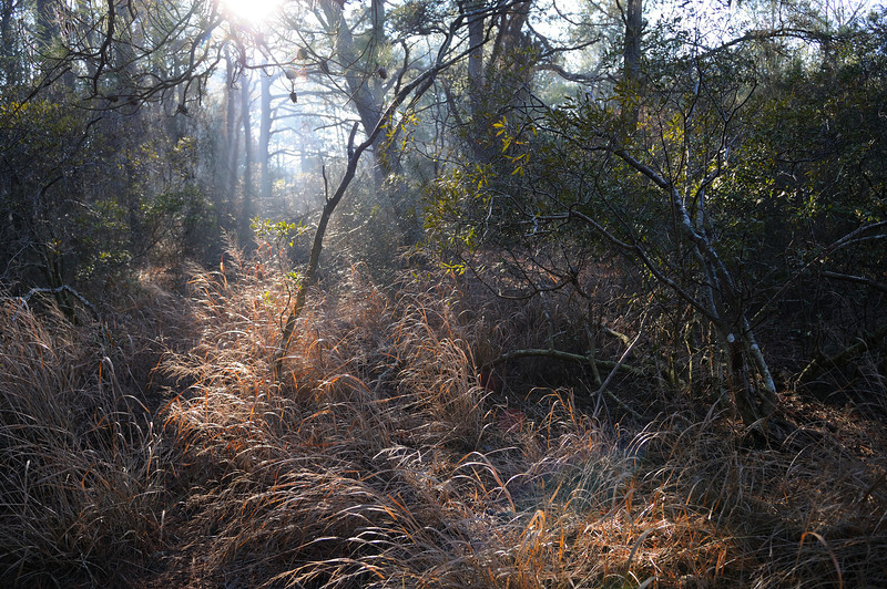 """Freezing and damp at the same time the air was thick.......as were the briers and trees. Many trees were toppled in super storm """"Sandy"""" changing the horse paths and making it more difficult to get through the forest."""