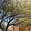 Tree Over Austin