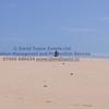 Ratray Beach - 58