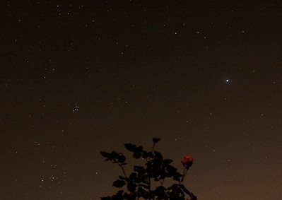 Taurus, Pleides, Jupiter and a rose