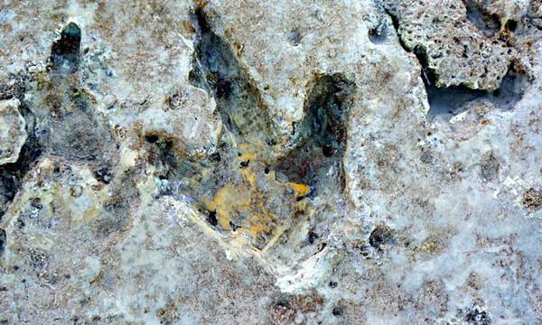 More dinosaur footprints found at Broome.