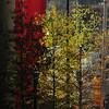 last bit of fall on John Portman Drive