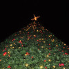 Great Christmas tree in Centennial Park