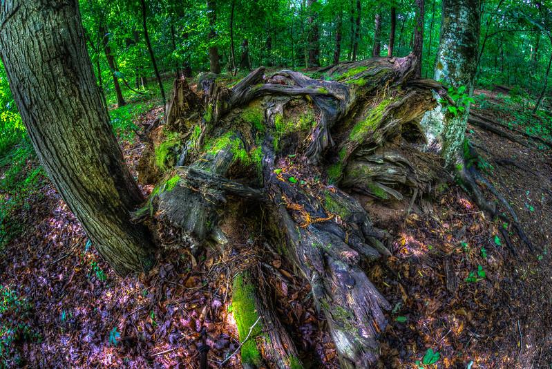 Sope Creek Chattahoochee National Forest