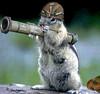 SquirrelQueda in training.