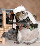 Attack of the Killer Data Squirrels