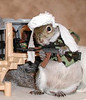 This is the ringleader of the dreaded terrorist netowork of killer data squirrels, SquirrelQueda. They hate us because of our electronic freedom. Our ability to rapidly look up patient's medical histories and trend lab values drives them crazy.