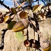 """PA318506<br /> <br /> <a href=""""http://ca.audubon.org/LSP"""">http://ca.audubon.org/LSP</a>"""