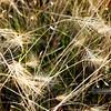 """PA318522<br /> <br /> <a href=""""http://ca.audubon.org/LSP"""">http://ca.audubon.org/LSP</a>"""