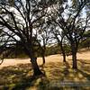 """PA318530<br /> <br /> <a href=""""http://ca.audubon.org/LSP"""">http://ca.audubon.org/LSP</a>"""