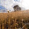 """PA318523<br /> <br /> <a href=""""http://ca.audubon.org/LSP"""">http://ca.audubon.org/LSP</a>"""