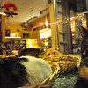 12:13 am - A few cats at House of Mews, a feline rescue group have a touch of insomnia