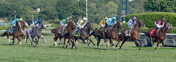 J.S.Carras/DIgitalfirstmedia.com   A large field of horses work their way to the rail during the 7th race Saturday, August 30, 2014 at Saratoga Race Course in Saratoga Springs, N.Y..