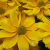 Susans on the BYU campus.