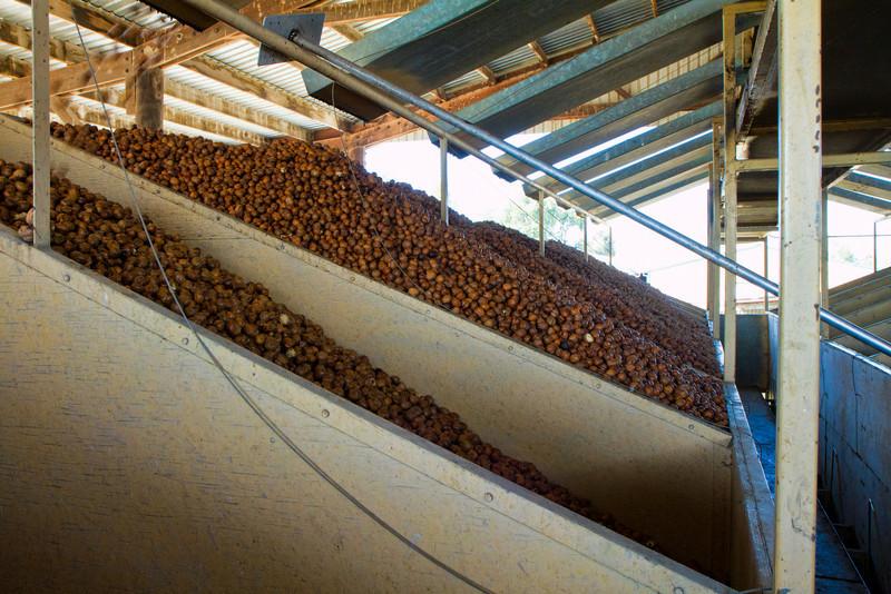 Drying Bins. ABF Walnut Plant, November 2010
