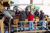Sorting Line. ABF Walnut Plant, November 2010