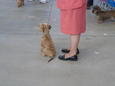 Aunt Susan @ Dog Show