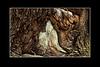 """Baumherz<br />Treeheart<br /><br /> - mehr dazu in meinem Blog: <a href=""""http://arnohelfer.wordpress.com/2011/11/17/baumherz/"""">Baumherz</a><br />"""
