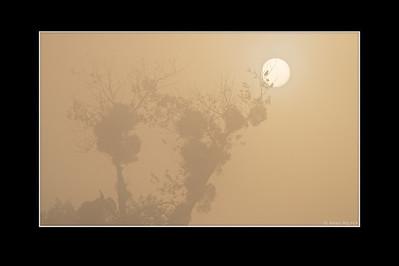 Sonnenaufgang im Nebel - Rheinauen, DeutschlandSunrise in fog - Rheinauen, Germany - mehr dazu in meinem Blog: Sonnenaufgang im Nebel