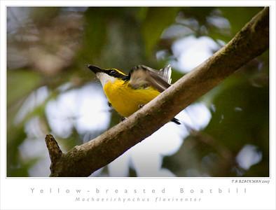 Australian Birds 2007