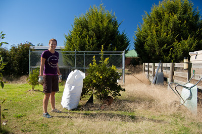 In the garden in Avenel - time for operation 'Clear Tumbleweed'!