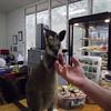 The Sanctuary's pet baby kangaroo