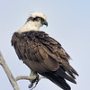Little Eagle, Gold Coast, Queensland.