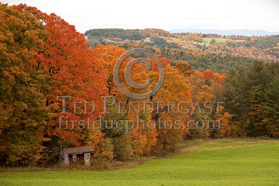 Shed & Trees - Macks Mountain Rd - Barnet, VT