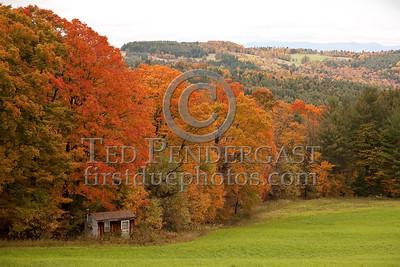 Shed & Trees - Macks Mountain Rd - Barnet, VT