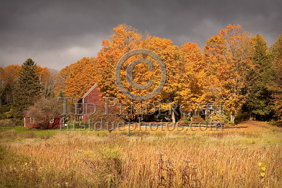Trees & Dark Sky - Vincent Flats Rd - East Montpelier,VT