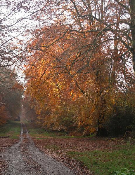 The track through Farnham Woods.