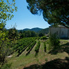 South facing vineyard