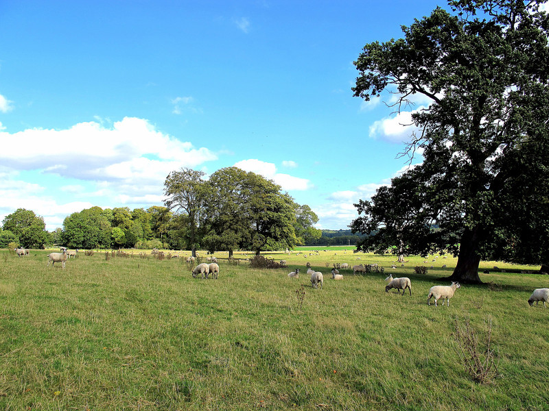 A pastoral setting - typical of this area.