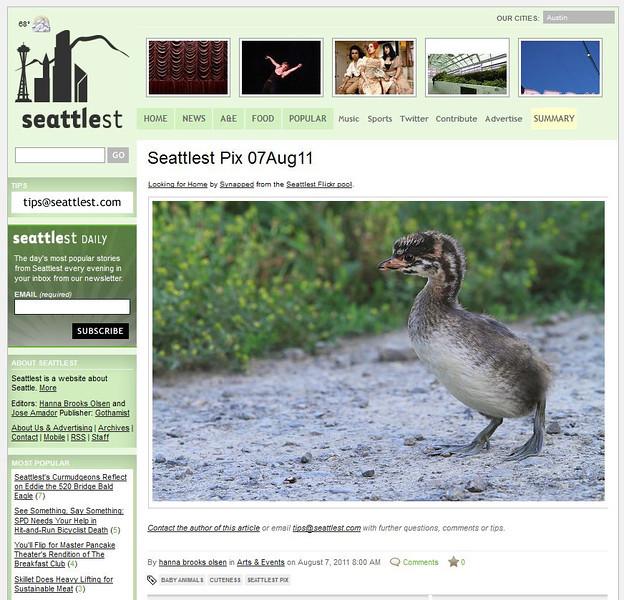2011 08-7 Seattlest online newspaper
