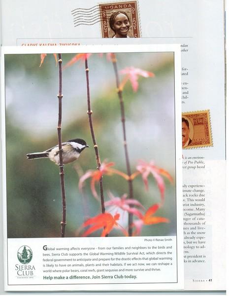2008 11 (November) Sierra Club membership pullout