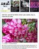 2012 5-27 LAist online newspaper