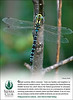 2009 7 (July) Sierra Club membership pullout