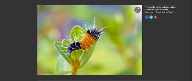 Third place, International Garden Photographer of the Year contest 2015