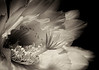 Night Bride<br /> International Garden Photographer of the Year 2012, Finalist (Monochrome)