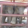 Elephant Kraal Pavilion, elephants!