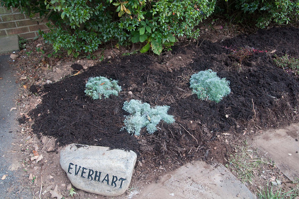 This is called silvermound.  Each plant will grow to be about a foot in all directions.