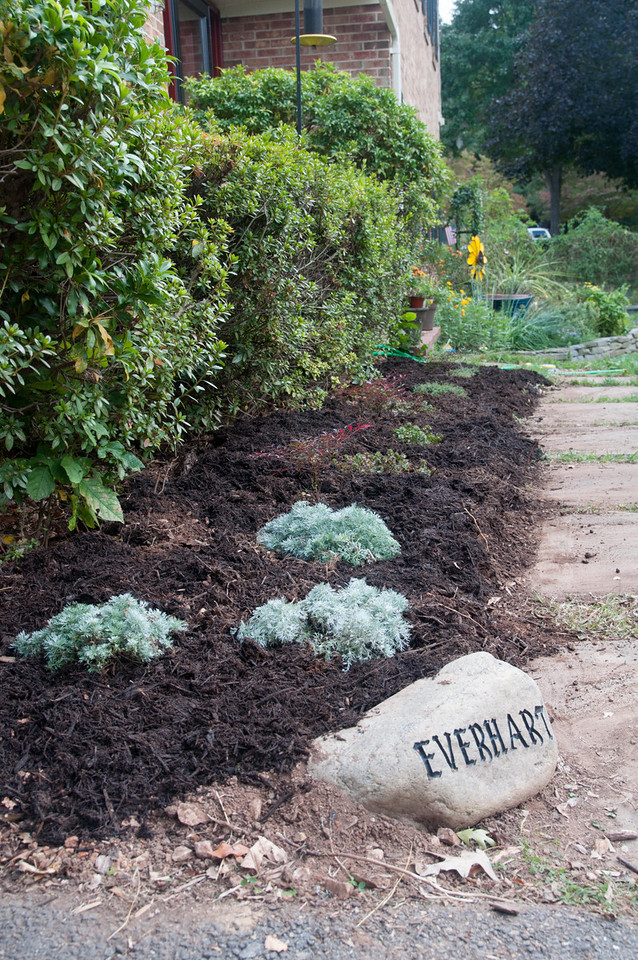 Looking down the new bed.  It used to be all hostas that got eaten by the deer like salad.