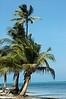 belizian beach palms