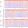 Comparision of amino acid sequences of beta-globin from various species