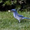 BIRDS 50