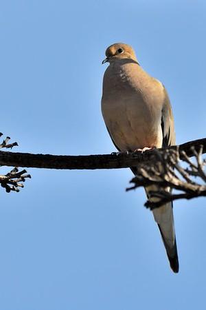 BIRDS 37