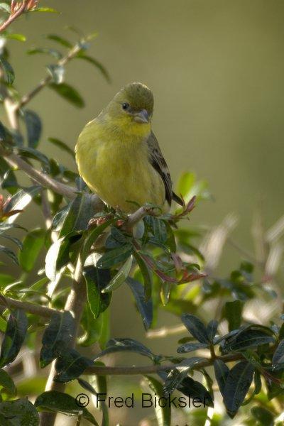 BIRDS 22