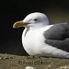 BIRDS 27