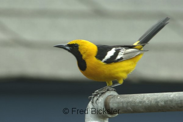 BIRDS 40